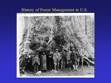 History of Forest Management in U.S.. Distribution of National Forest Lands - Diversity of Forest Types in U.S. - East to West, North to South.