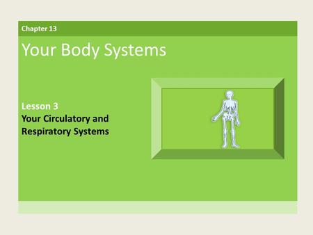 Chapter 13 Your Body Systems Lesson 3 Your Circulatory and Respiratory Systems.
