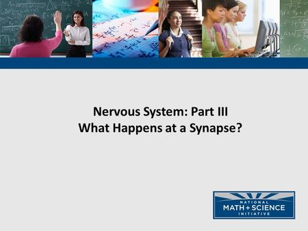 Nervous System: Part III What Happens at a Synapse?