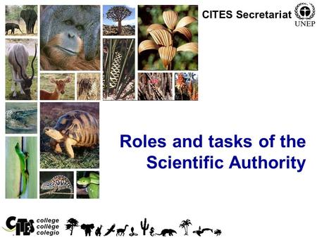 1 Roles and tasks of the Scientific Authority CITES Secretariat.
