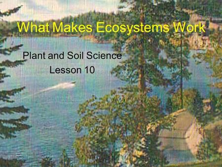 What Makes Ecosystems Work Plant and Soil Science Lesson 10.