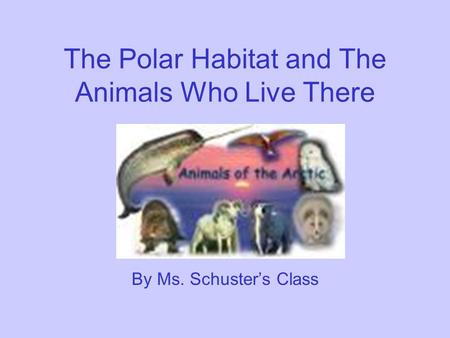 The Polar Habitat and The Animals Who Live There