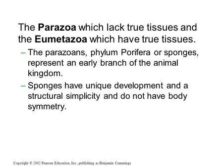 The Parazoa which lack true tissues and the Eumetazoa which have true tissues. –The parazoans, phylum Porifera or sponges, represent an early branch of.