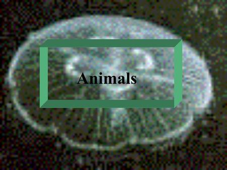 Animals Basic reference: Chapters 32 - 35 Taxonomy: Kingdom Animalia contains well over 30 phyla basic categories: invertebrates - animals without a.