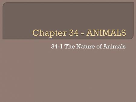 34-1 The Nature of Animals. Vertebrate An animal with a backbone Invertebrate An animal without a backbone.