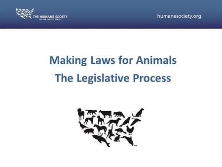 Making Laws for Animals The Legislative Process. Some situations require concrete changes in the law Legitimization of animal protection issues Media.