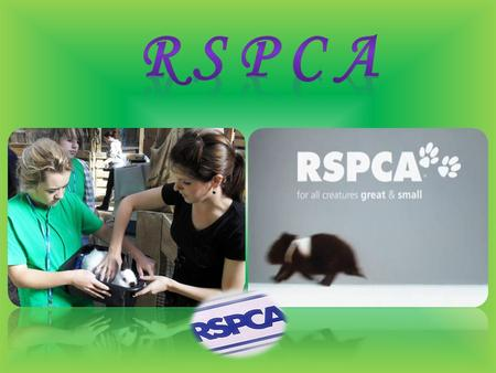 The Royal Society for the Prevention of Cruelty to Animals (RSPCA) is a charity operating in England and Wales that promotes animal welfare. In 2011,