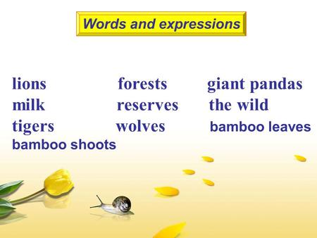 Lions forests giant pandas milk reserves the wild tigers wolves bamboo leaves bamboo shoots Words and expressions.