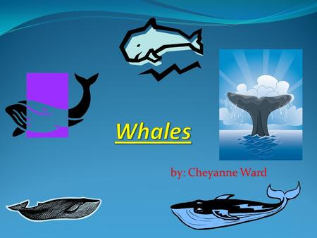 Whales by: Cheyanne Ward.