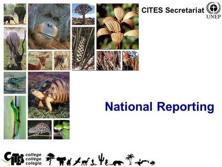 1 National Reporting CITES Secretariat. 2 Overview National reporting in CITES falls under the following categories: –Annual report on trade in CITES.