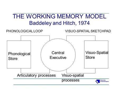 THE WORKING MEMORY MODEL Baddeley and Hitch, 1974 Central Executive Phonological Store Visuo-Spatial Store Articulatory processesVisuo-spatial processes.