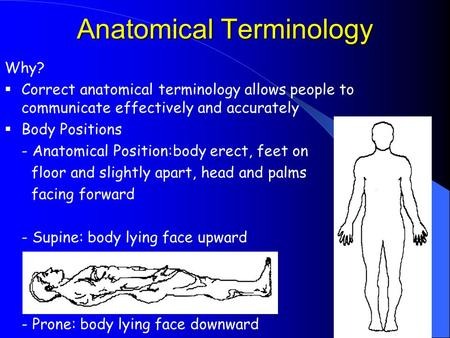 Anatomical Terminology Why?  Correct anatomical terminology allows people to communicate effectively and accurately  Body Positions - Anatomical Position:body.