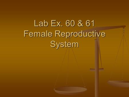 Lab Ex. 60 & 61 Female Reproductive System