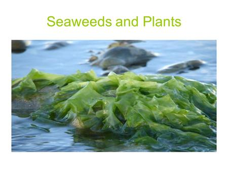 Seaweeds and Plants.