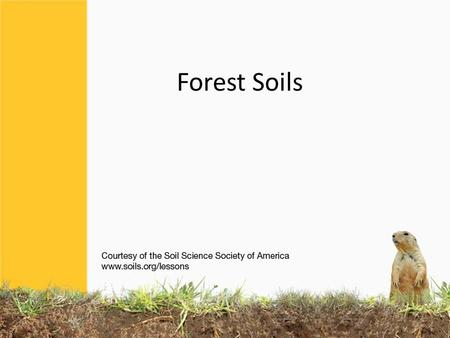 Forest Soils. Forests used to cover the Eastern half of the United States, and most of southern Canada. Most forests are not too hot, or not too cold,