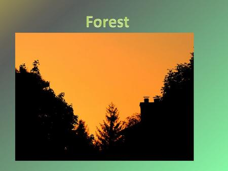 The forest is one of Earth's main biome. The forest is land area mostly covered by trees. Our habitat is a temperate forest. It has four seasons They.