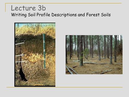Lecture 3b Writing Soil Profile Descriptions and Forest Soils.