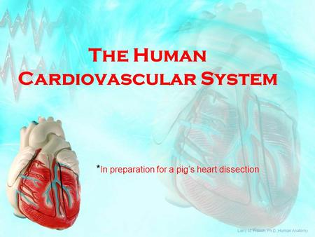 The Human Cardiovascular System * In preparation for a pig's heart dissection Larry M. Frolich, Ph.D.,Human Anatomy.