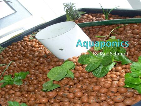 By Karl Schmidt. Introduction Hello everyone, I suppose you are wondering what is an aquaponics system. Don't worry about that now I'll tell you later.