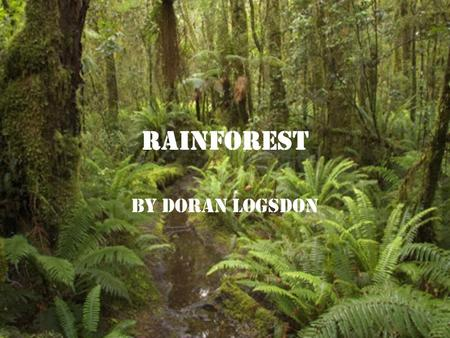 Rainforest By Doran Logsdon. Rainforests Rainforests are very dense,warm, wet forests that are havens for millions of plants and animals.The plants in.