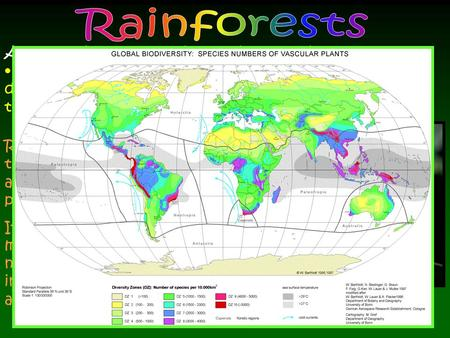 Rainforests are characterized by high rainfall, and by definition have a normal annual rainfall between 68 inches to 78 inches, or more.(1750 mm and 2000.
