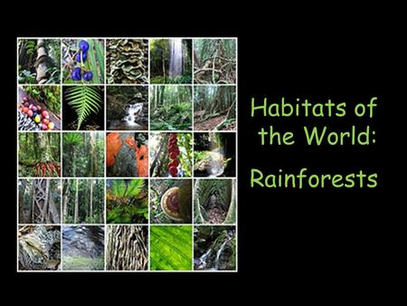 Habitats of the World: Rainforests. What is a Rainforest? Tropical rainforests are forests with tall trees, warm climate, and lots of rain. In some rainforests.