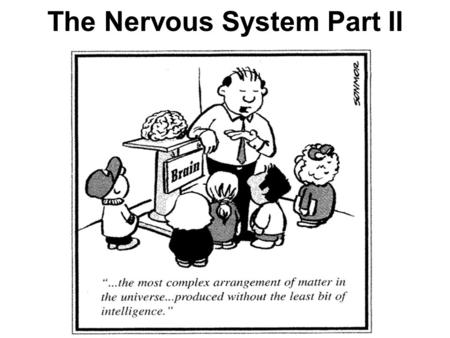 The Nervous System Part II. Objectives: Describe and recognize nervous system structures in other organisms Understand and explain the structures and.