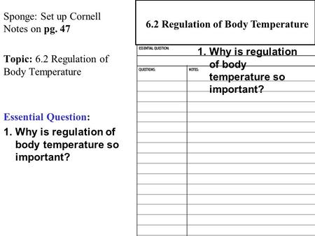 Sponge: Set up Cornell Notes on pg. 47 Topic: 6.2 Regulation of Body Temperature Essential Question: 1.Why is regulation of body temperature so important?