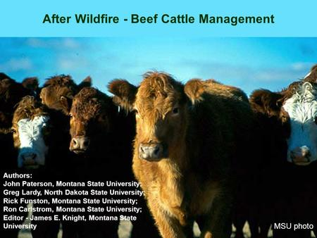 After Wildfire - Beef Cattle Management MSU photo Authors: John Paterson, Montana State University; Greg Lardy, North Dakota State University; Rick Funston,
