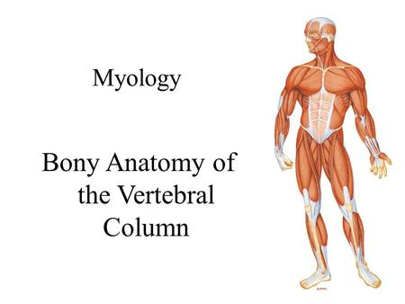 Bony Anatomy of the Vertebral Column