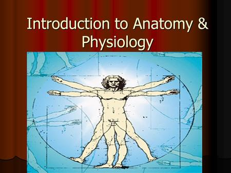 Introduction to Anatomy & Physiology. ANATOMY THE STUDY OF THE FORM & STRUCTURE OF THE HUMAN BODY THE STUDY OF THE FORM & STRUCTURE OF THE HUMAN BODY.