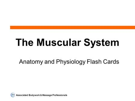 Associated Bodywork & Massage Professionals The Muscular System Anatomy and Physiology Flash Cards.