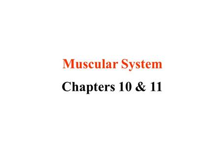 Muscular System Chapters 10 & 11. Did you know? more than 50% of body weight is muscle ~ 650 muscles in the human body (we will memorize 53)