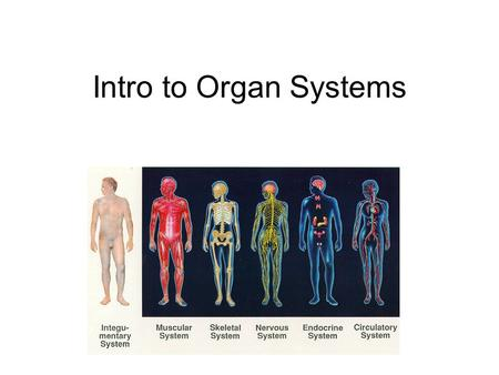 Intro to Organ Systems. Describe how tissues and organs are formed. Describe the organization of cells into tissues, tissues into organs, and name key.