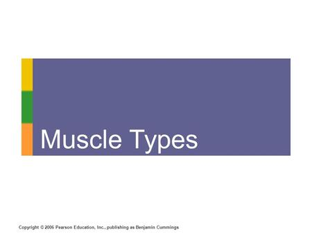 Copyright © 2006 Pearson Education, Inc., publishing as Benjamin Cummings Muscle Types.