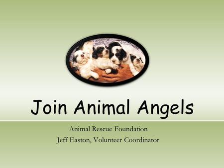 Join Animal Angels Animal Rescue Foundation Jeff Easton, Volunteer Coordinator.