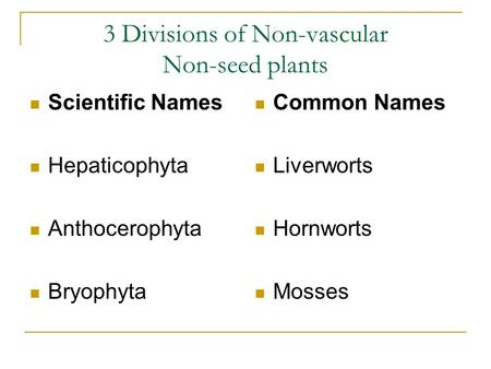 3 Divisions of Non-vascular Non-seed plants Scientific Names Hepaticophyta Anthocerophyta Bryophyta Common Names Liverworts Hornworts Mosses.