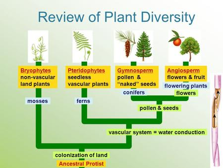 Review of Plant Diversity