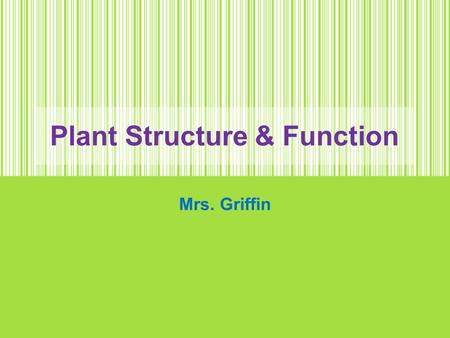 Plant Structure & Function Mrs. Griffin. Photosynthesis Review Cross Section of Leaf.