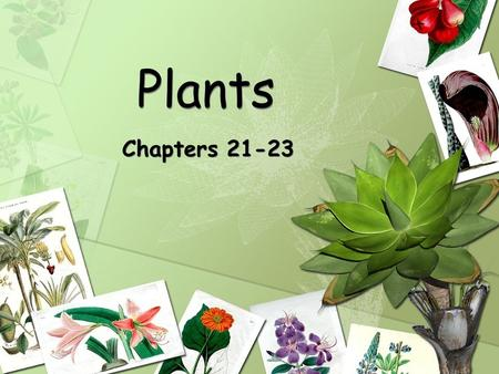 Plants Chapters 21-23.