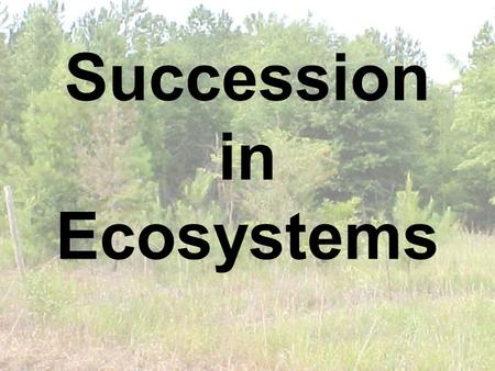 Succession in Ecosystems. What caused this? Equilibrium What did the events do to the earth? How did the events do this? What part of the earth was.