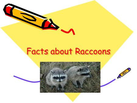 Facts about Raccoons. Raccoons Raccoons in the City.