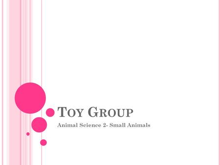 T OY G ROUP Animal Science 2- Small Animals. T OY G ROUP So-named because of their small size, and is most often used as house pets and companions Affenpinscher.