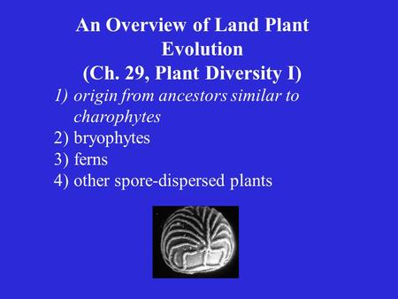 An Overview of Land Plant Evolution (Ch. 29, Plant Diversity I) 1)origin from ancestors similar to charophytes 2)bryophytes 3)ferns 4)other spore-dispersed.