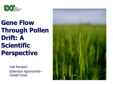 Gene Flow Through Pollen Drift: A Scientific Perspective Joel Ransom Extension Agronomist – Cereal Crops.