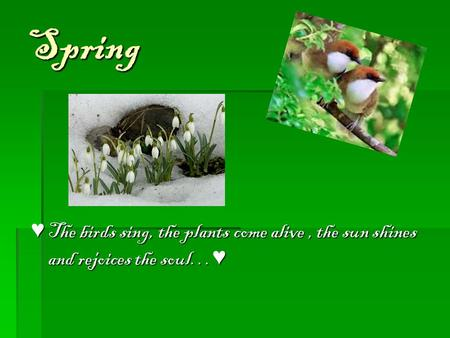 Spring ♥ The birds sing, the plants come alive, the sun shines and rejoices the soul… ♥