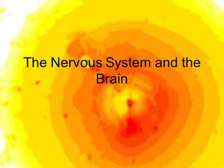 The Nervous System and the Brain