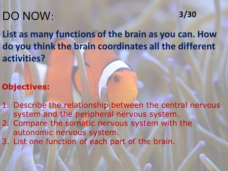 DO NOW : List as many functions of the brain as you can. How do you think the brain coordinates all the different activities? Objectives: 1.Describe the.