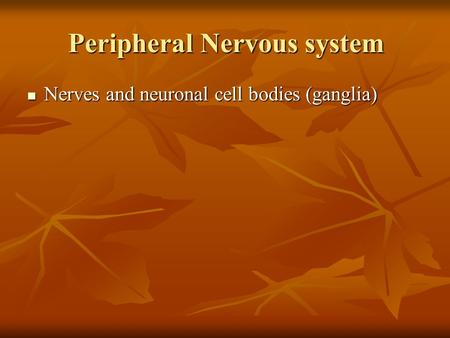 Peripheral Nervous system Nerves and neuronal cell bodies (ganglia) Nerves and neuronal cell bodies (ganglia)