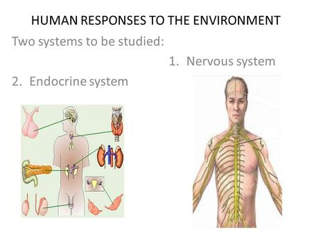 HUMAN RESPONSES TO THE ENVIRONMENT Two systems to be studied: 1.Nervous system 2.Endocrine system.